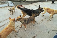 CFK firmó decreto que prohibe la matanza de perros y gatos