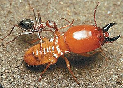 P gina 12 futuro for Hormigas en el jardin