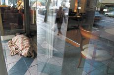 http://www.pagina12.com.ar/fotos/20090713/notas/na13fo02.jpg