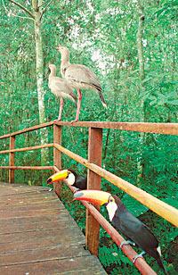 /fotos/turismo/20030406/notas_t/aves.jpg