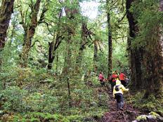 La exuberante selva valdiviana en todo su esplendor.